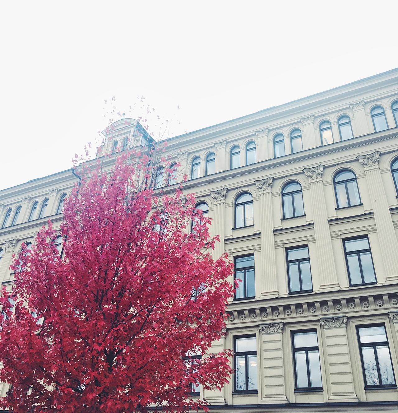 sthlm_autumn_hannaskoog